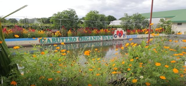 Cabutero Organic Farm