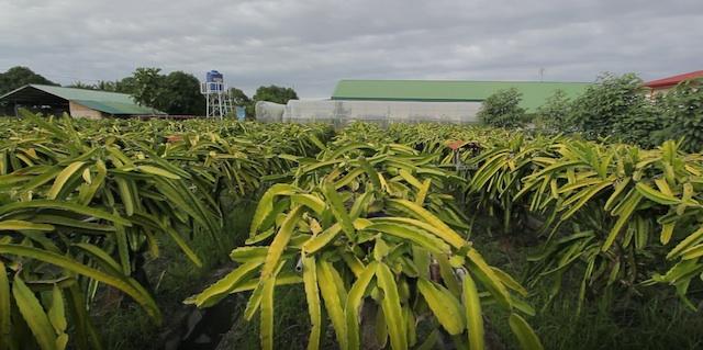 Gabutero Farm